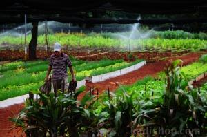 Küba Kent Çiftliği
